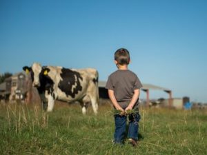 Young boy and a dairy cow