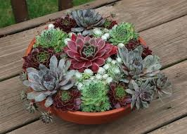 Cover photo for Succulent Container Garden Workshop